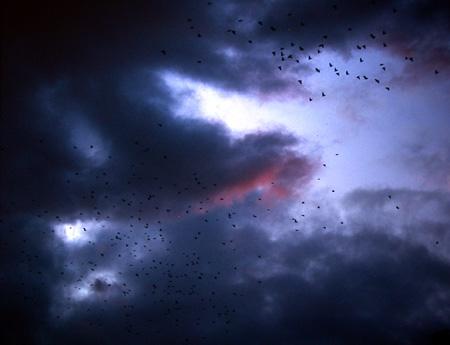 swallows5.jpg