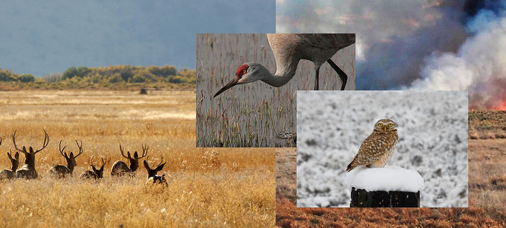 Montage of photos of Malheur