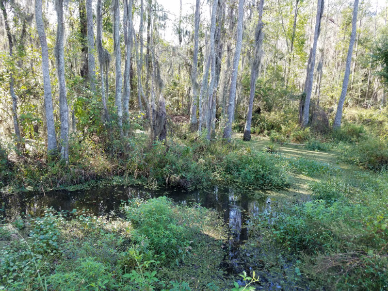 Nature Trail by cypress swamp
